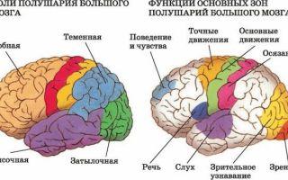 Амнестическая афазия: причины, симптомы, лечение, коррекция