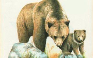 Картинки домашних и диких животных для малышей
