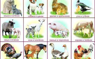 Конспект логопедического занятия «Домашние животные и их детёныши» в подготовительной группе