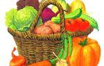 Картинки для детей на тему «Овощи» для занятий в детском саду и дома