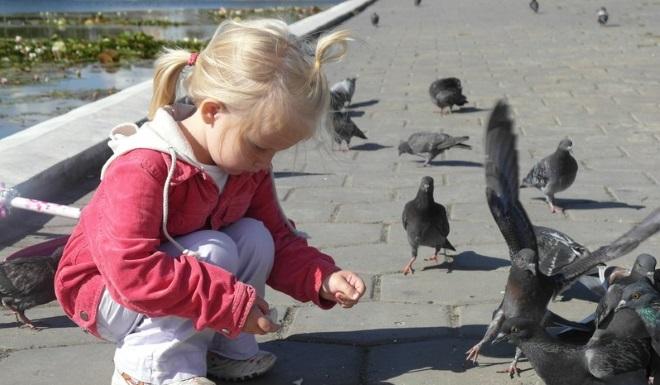 Кормление голубей развивает мелкую моторику
