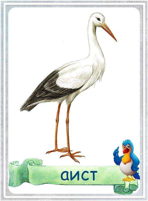 Карточка Аист
