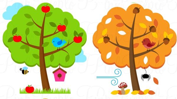 Картинка осеннего и летнего деревьев