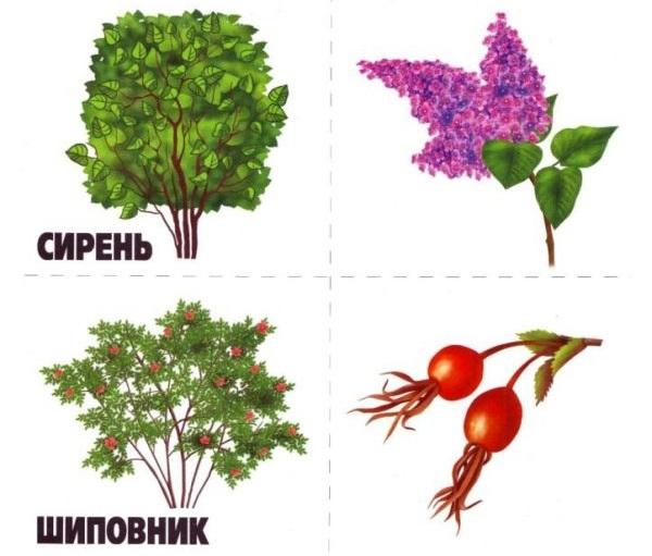 Дидактическая карточка Растения