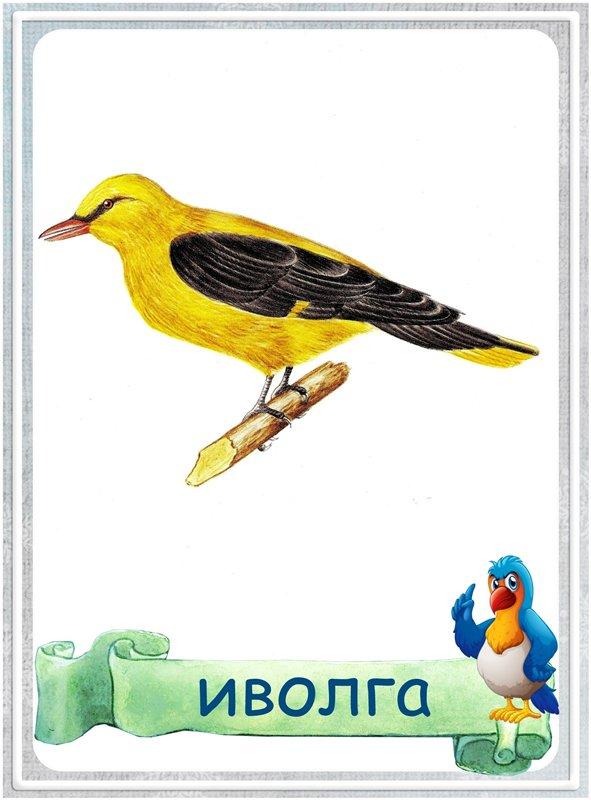 Карточка Иволга