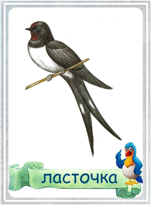 Карточка Ласточка