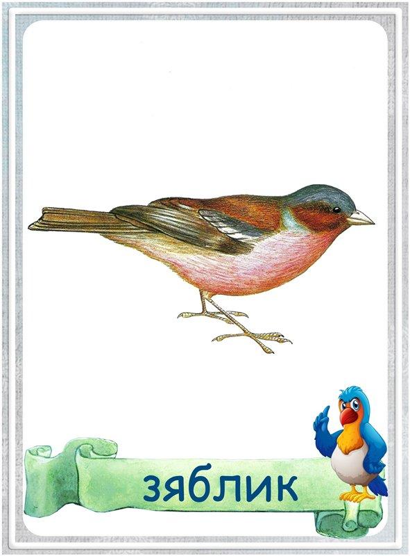 Карточка Зяблик
