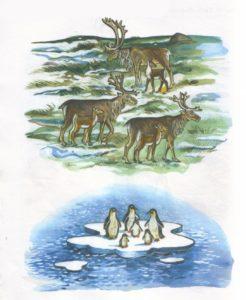 Животные севера в сюжетных картинках 6