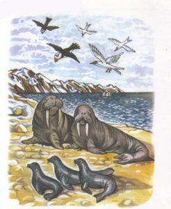 Животные севера в сюжетных картинках 7