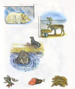 Животные севера в сюжетных картинках 8