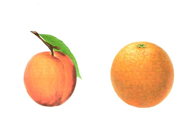 Абрикос и апельсин