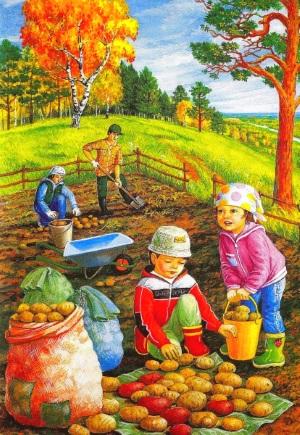 Дети копают картошку