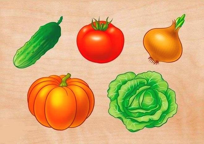 Плакат овощи 1