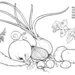 Редис лук репа картофель морковь