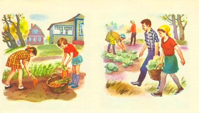 Сюжет сбор урожая