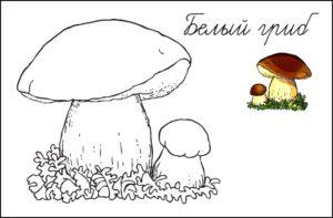 Белый гриб раскраска