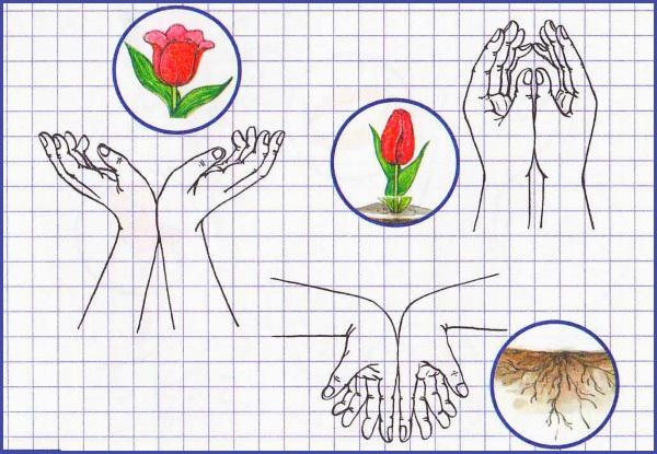 Упражнение Цветок