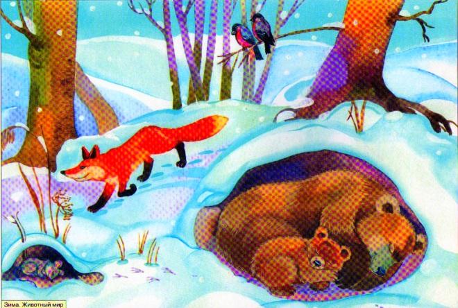 Животный мир зимой