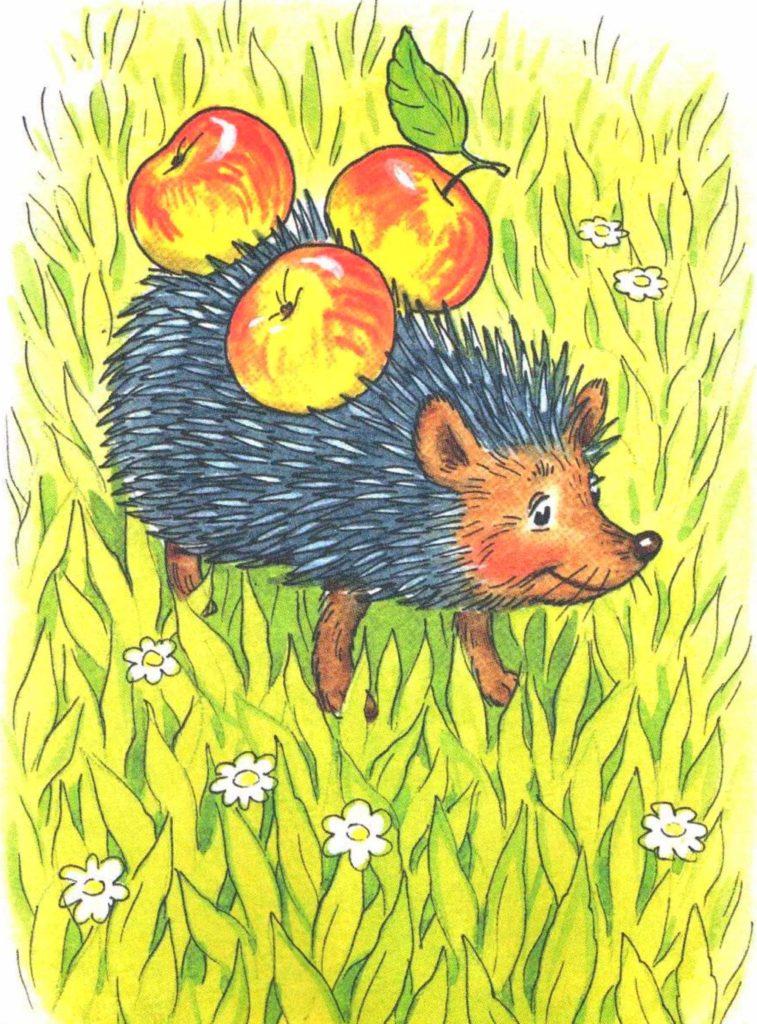 Еж несет яблоки