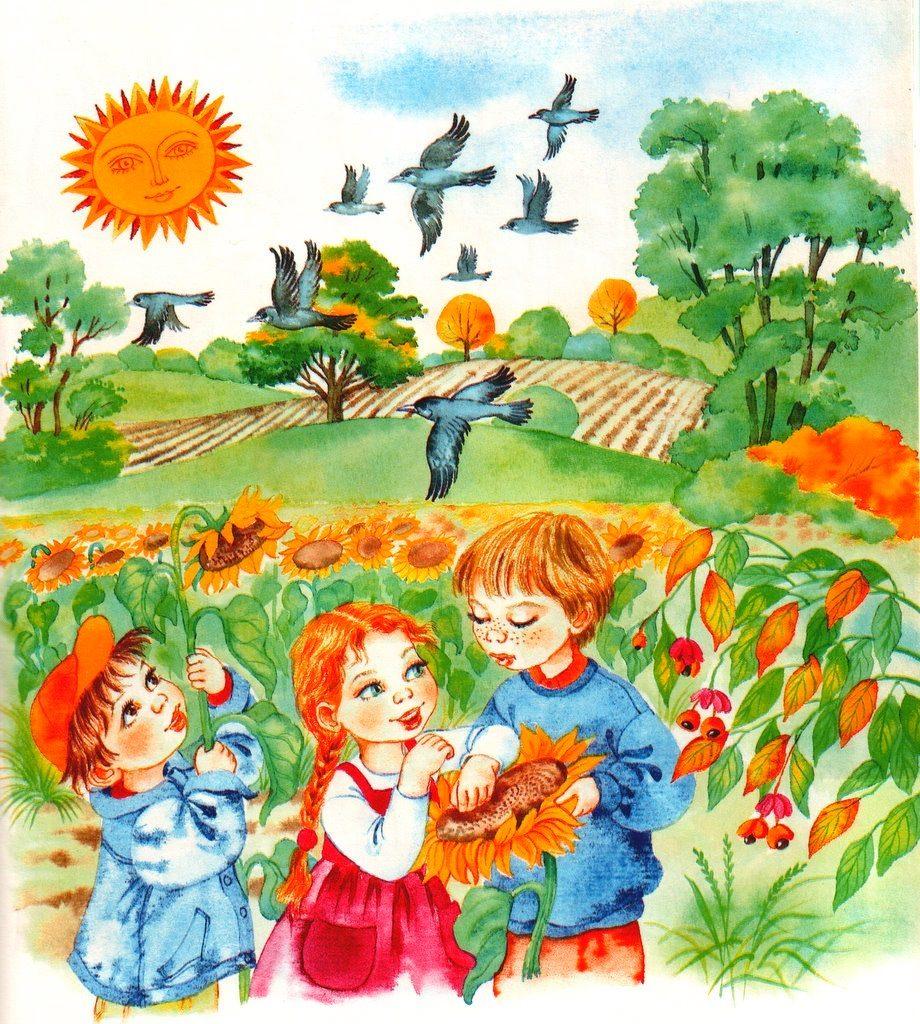 Сбор урожая подсолнечника