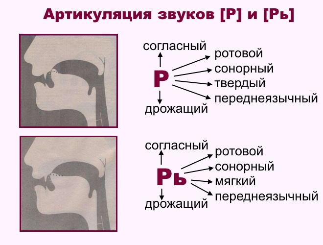 Артикуляция звуков р и рь