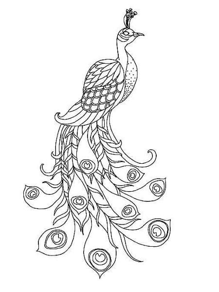 Схема павлина для квиллинга