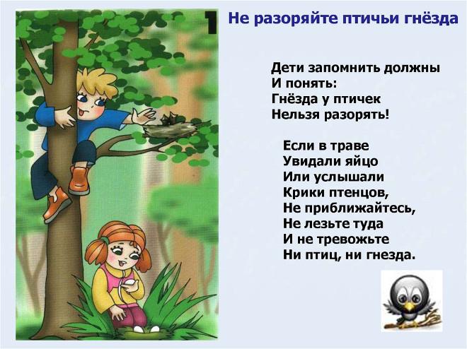 Правило поведения в лесу 1