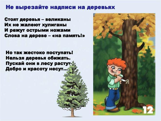 Правило поведения в лесу 12