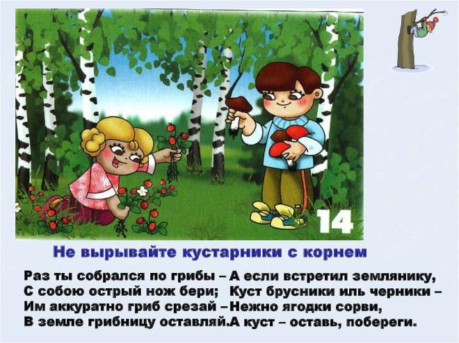 Правило поведения в лесу 14