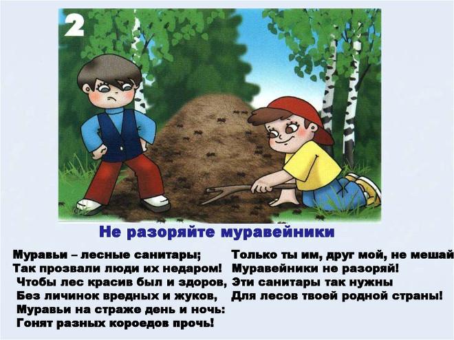Правило поведения в лесу 2