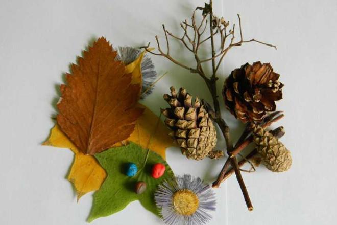 Шишки, листья для поделки