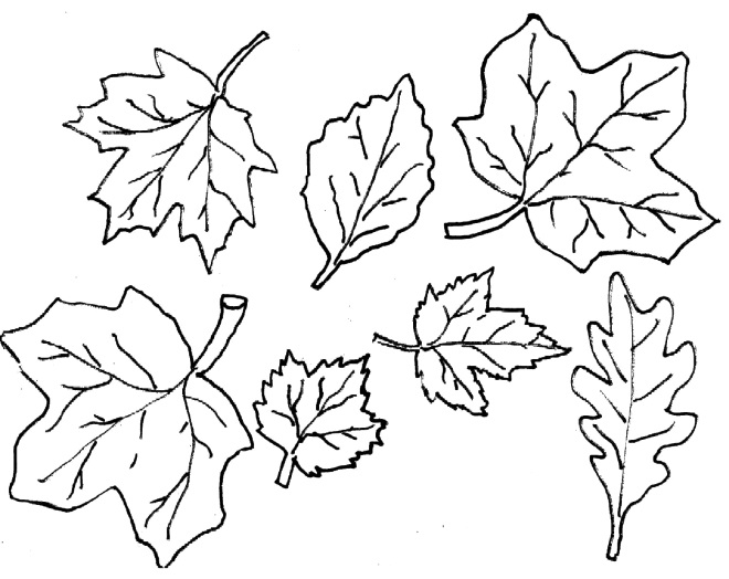 Шаблон листьев 4